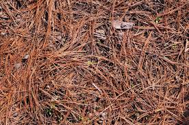 How To Mulch Flower Beds 5 Alternatives To Mulch In Flower Beds A Green Hand