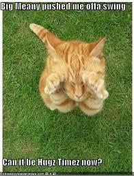 Cat Hug Meme - image 35928 is it can be hugs tiem now plees know your meme