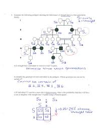 biology pedigree worksheet free worksheets library download and