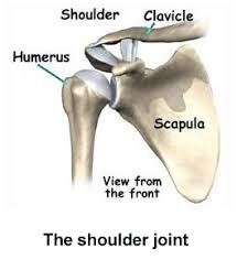 Front Of The Shoulder - rotator cuff