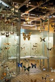 permanent exhibition virtual insect hall royal belgian