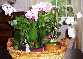 Indoor Window Planter Indoor Window Planter Marissa Kay Home Ideas Top Indoor