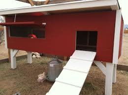 interested in raising chickens in your backyard home life