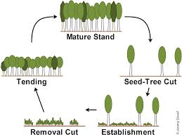 3 3 regeneration methods seed tree