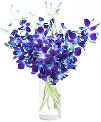 blue orchids premium cut blue orchids 10 stems orchid with vase