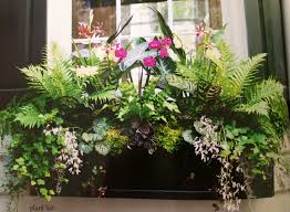 Fern Decor by Window Box Charleston Ferns Geraniums Orchids Gilded Mint