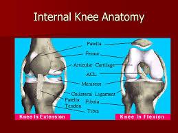 Interactive Knee Anatomy Knee Evaluations Ppt Video Online Download