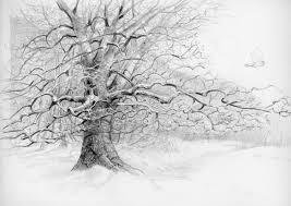 pencil drawing of a tree photo to u003cb u003epencil sketch u003c b u003e u003cb u003edrawing