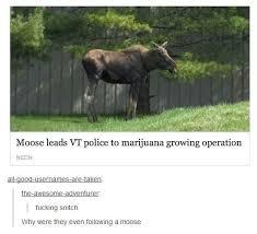 Moose Meme - wtf moose meme by silent tragedy memedroid