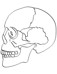 coloring pages download free skull bones coloring pages download free skull bones coloring