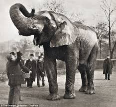 Blind Men And The Elephant Story For Children Was Jumbo The Elephant Owned By P T Barnum Murdered By His Keeper