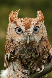 owl eyes gatsby images reverse search