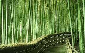 landscape bamboo landscape design with green bamboo design ideas