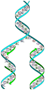 an introduction to molecular biology dna the unit of life