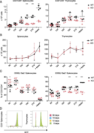 a coronin 1 u2013dependent decision switch in juvenile mice determines