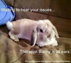 Funny Rabbit Memes - rabbit meme 28 images 30 most funny rabbit meme pictures and