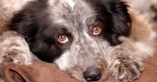 Alabama how long to travel a light year images Alabama rot is back how to spot the disease killing dozens of jpg