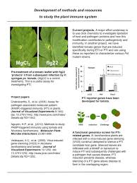 Types Of Bacterial Diseases In Plants - greg martin boyce thompson institute