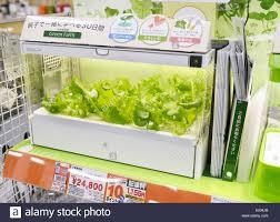 hydroponics stock photos u0026 hydroponics stock images alamy