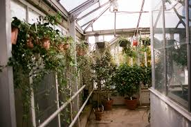 free images flower tool balcony backyard botany garden