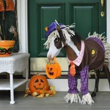 halloween horse ttpa halloween trail ride brockdale park oct 31 trinity trail