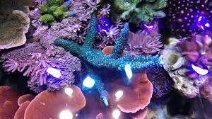 led reef aquarium lighting led reef aquarium light livablemht org