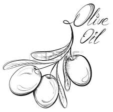 hand drawn olive set olive oil and olive branch black and white