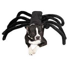 White Dog Halloween Costume Dog Halloween Costume Ebay