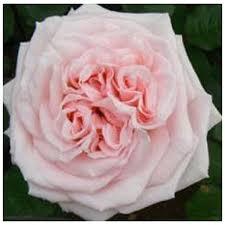 flowers denver valentines day flowers delivered in denver calla