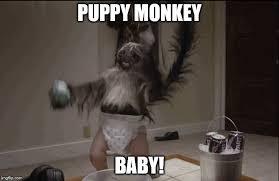 Baby Monkey Meme - puppy monkey baby latest memes imgflip