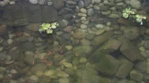 build your own backyard pond fish farm minnow bait trap breeding