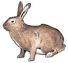 How Do I Get Rid Of Rabbits In My Backyard Rabbit Repellent Natural Options In The Garden Gardeners Com