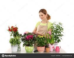 Beautiful House Plants by Florist With Beautiful House Plants U2014 Stock Photo 139787462