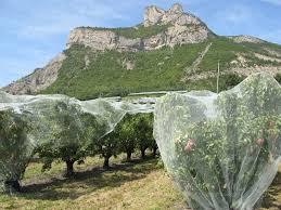 chambre agriculture hautes alpes hautes alpes à l heure de la récolte les vergers s ouvrent au