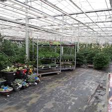 yeovil christmas tree farm home facebook