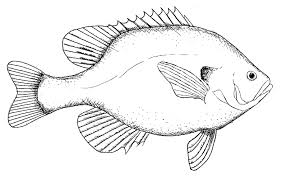 drawing fish free download clip art free clip art on clipart