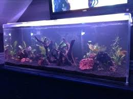 led reef lighting reviews aquarium led lighting reviews planted aquarium led lighting reviews