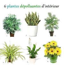 plante d駱olluante chambre plantes depolluantes chambre plantes vertes plantes depolluantes