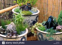 minature style gardens in large ceramic pots with
