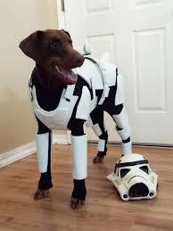 dewback stormtrooper rider star wars fancy dress halloween pet dog