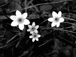 black and white flowers wallpaper 10 cool wallpaper