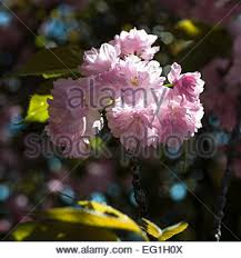 ornamental stock photos ornamental stock images page 19 alamy