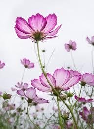 free images nature blossom petal autumn flora plants