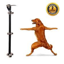 dog training pets go here