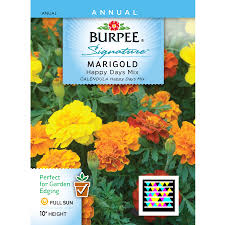 flower seed packets shop burpee marigold flower seed packet at lowes