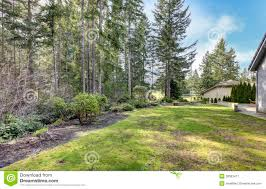 Trees Backyard Backyard With Pine Trees And Side Of The House Royalty Free Stock