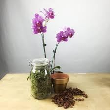 orchid centerpiece diy orchid centerpiece