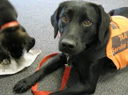types of service dogs therapeutic medical alert service dogs