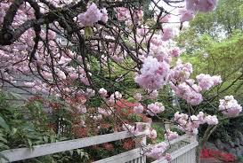 28 flower tree names names of pink flowering trees