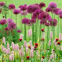 awesome allium combos